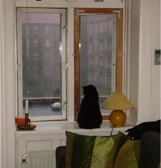 Kat sidder i vindueskarm med åbent vindue og gitter for vindue