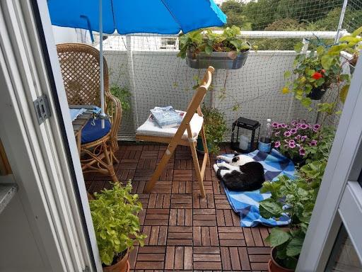 Kat sover på altan der er kattesikret med kattenet