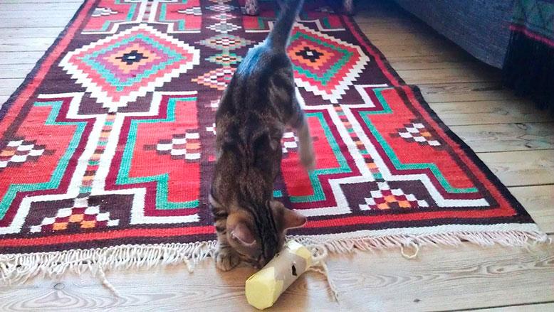 Aktivering af kat med en paprulle