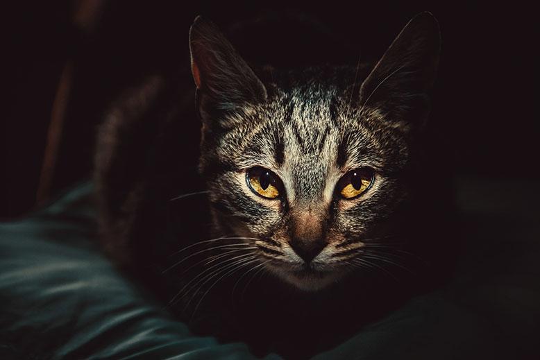 Kat ligger vågen i sengen om natten