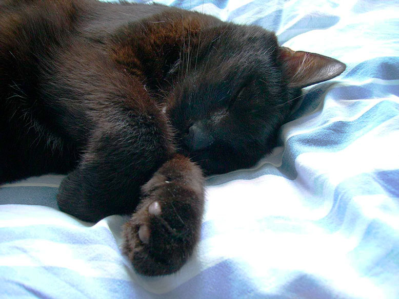 Kat ligger i sengen og sover